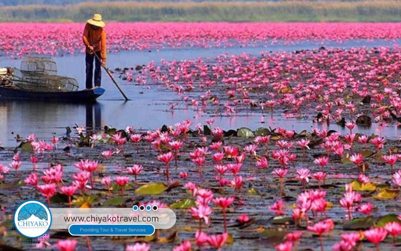 Anzali Lagoon, a unique attraction