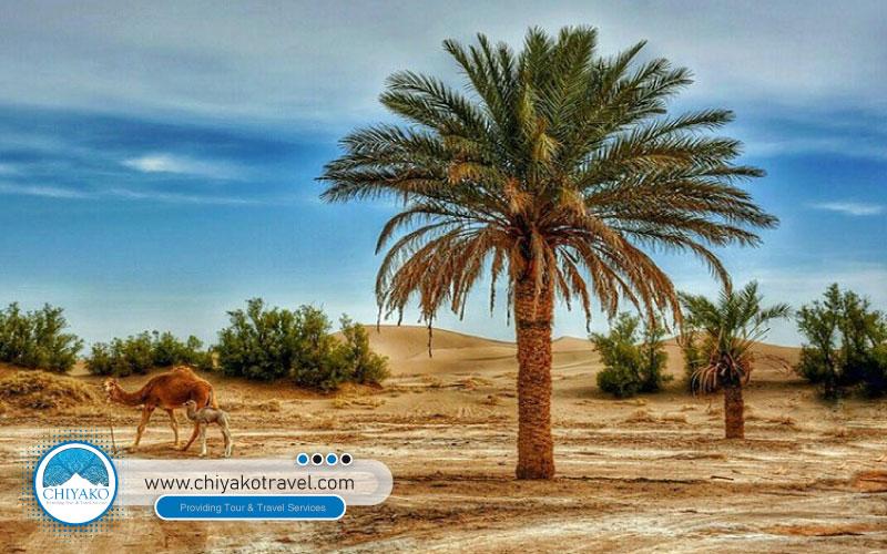 Yazd deserts
